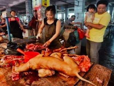 吃的少的狗 可为什么现在的人很少吃狗肉